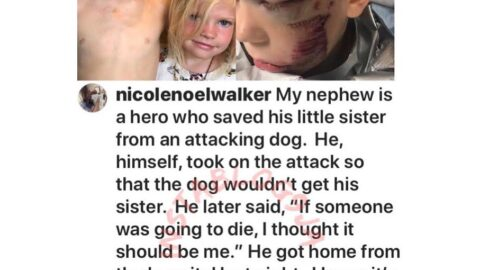 Little boy risks it all to save his sister from an attacking dog in Wyoming, USA