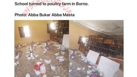 COVID-19: School owner allegedly converts classroom into poultry farm in Borno State