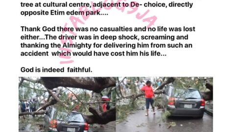 No casualties as a mighty tree falls on a parked car in Calabar, Cross River State