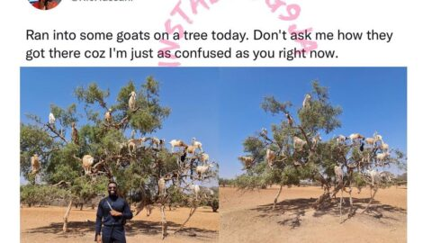 Singer Ric Hassani surprised to see tree-climbing goats in Morocco [Swipe]