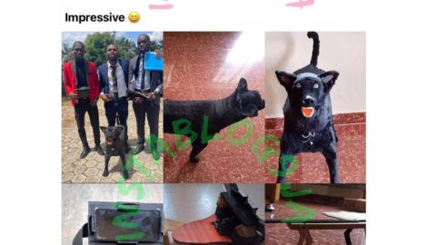 AAUA final year Physics students show off the robotic dog they built [Swipe]