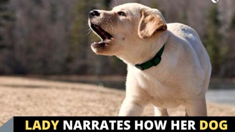 Lady narrates how her dog saved the day